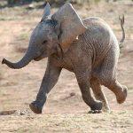 คอร์ดเพลง ช้าง - เพลงเด็ก
